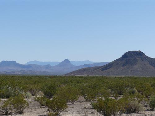 40 Acres, Level Terrain Great Views : Alpine : Brewster County : Texas