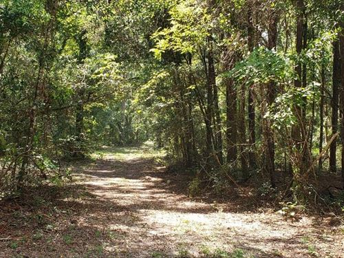 Land For Sale Dixie County Florida : Old Town : Dixie County : Florida