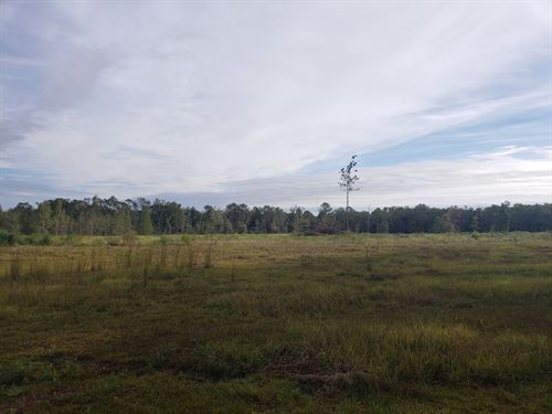 37 Acres For Sale Slocomb, Alabama : Slocomb : Geneva County : Alabama