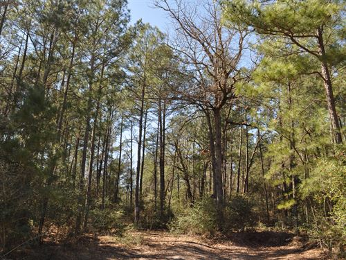 51 Ac Accessed By Easement Bishop : Huntsville : Walker County : Texas