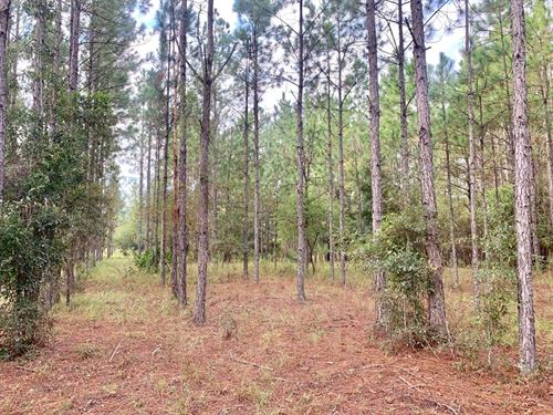 Vacant Land Bell Gilchrist County : Bell : Gilchrist County : Florida