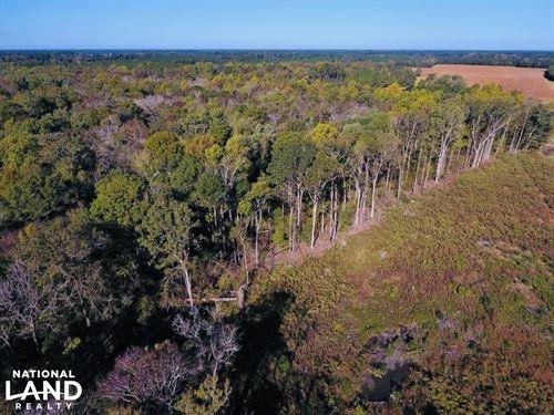 Hwy 43 Timber/Hunting Tract : Vanceboro : Craven County : North Carolina