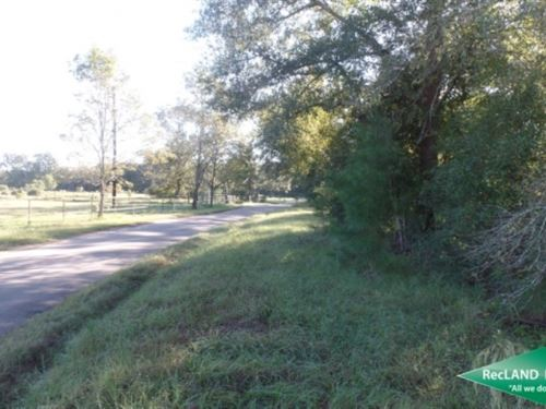 30.16 Ac, Timberland For Hunting : Spurger : Tyler County : Texas