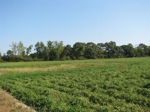 Beautiful Farm With Crop, Pasture : Mexia : Monroe County : Alabama