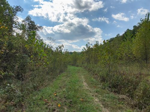Snake Hollow Rd, 92 Acres : Crooksville : Perry County : Ohio