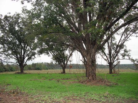 Hunting Land : Soperton : Treutlen County : Georgia