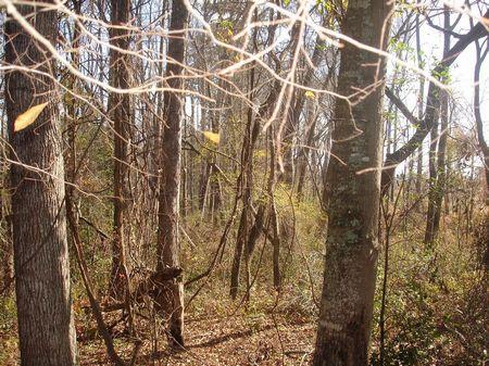 Rural Hunting Land : Soperton : Treutlen County : Georgia