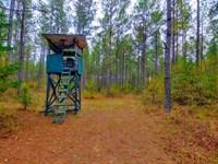 Affordable Land, $1,099 Per Acre : Maxeys : Oglethorpe County : Georgia