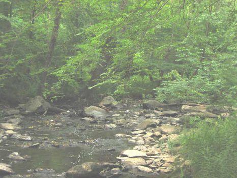 Brush Creek Frontage : Siler City : Chatham County : North Carolina