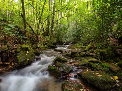 Dark Ridge Creek, 1100 Acres 3 : Balsam : Jackson County : North Carolina