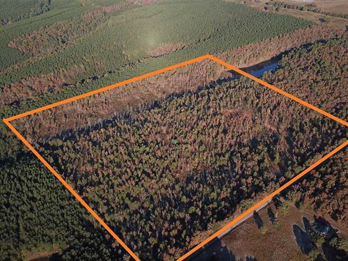 40 Acres of Timberland With Reserv : Center Ridge : Conway County : Arkansas