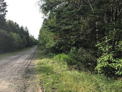 Woodlot Washington County Maine : Lubec : Washington County : Maine