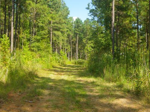 Little Indian Creek Tract : Union Springs : Bullock County : Alabama