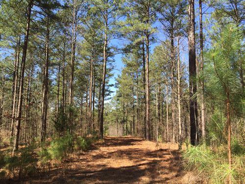 Boston Creek Hardwood & Pine Timber : Canton : Cherokee County : Georgia