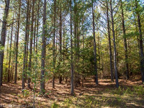 66.20 Acres Pauline, West Springs : Pauline : Spartanburg County : South Carolina