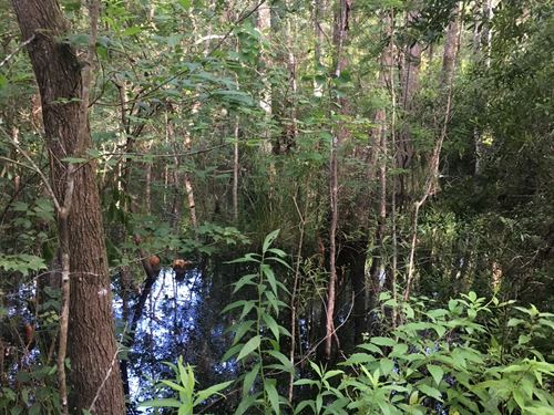 Affordable Hunting Tract : Monticello : Jefferson County : Florida