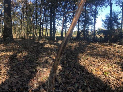 Hatchet Crp, Pasture & Timber : Tuckerman : Jackson County : Arkansas