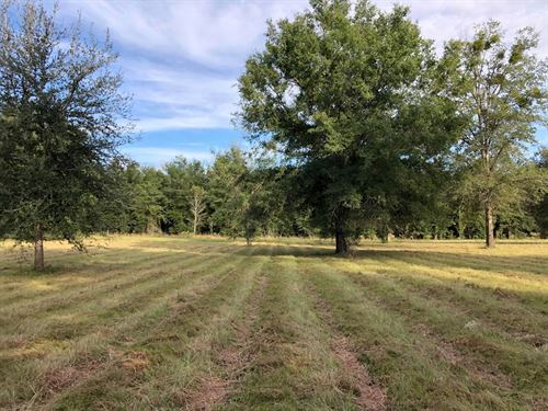 10 Acres Columbia County, FL : Fort White : Columbia County : Florida