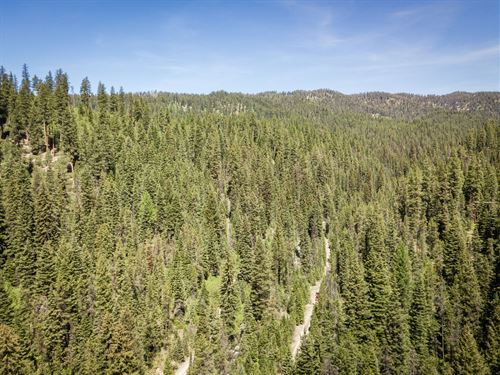Secluded Mountain Property Creek : Cascade : Valley County : Idaho