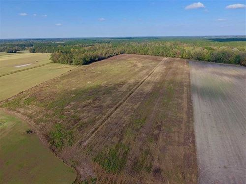 43.57 Acres of Farm And Timber Lan : Dover : Craven County : North Carolina