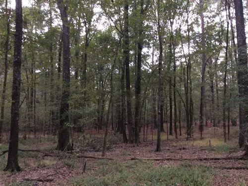 Timberlawn Road Tract, Hinds Count : Jackson : Hinds County : Mississippi