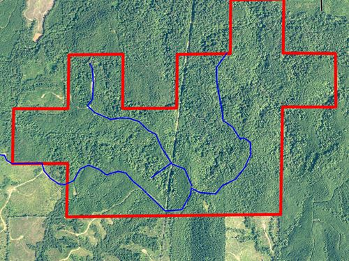 Timber Investment Property Pebble : Pebble Hill : Wilcox County : Alabama