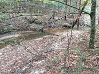 Sheep Trail Rd Tract : Brantley : Crenshaw County : Alabama
