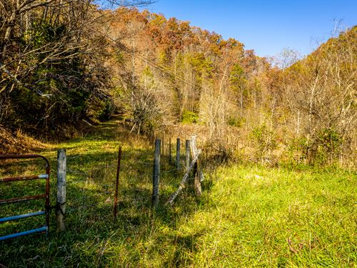 Almost 10 Acres Unrestricted, Creek : Eidson : Hawkins County : Tennessee