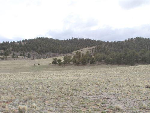 $215 Down to Own Paradise : Hartsel : Park County : Colorado