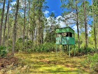 North Florida Hunting Tracts : Bronson : Levy County : Florida