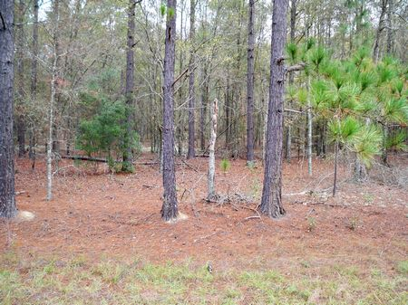 62 +- Ac Excellent Hunting  Tract : Summertwon : Emanuel County : Georgia