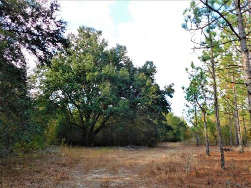 Great Hunting And Homesite on 54.1 : Manning : Clarendon County : South Carolina