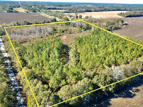 20 Acres Land in Black, Alabama : Black : Geneva County : Alabama