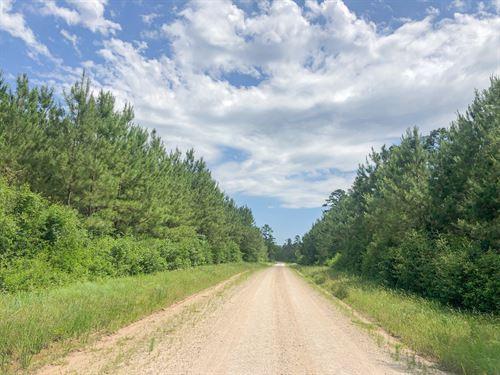 205 Acres Lost Indian Camp Road : Huntsville : Walker County : Texas