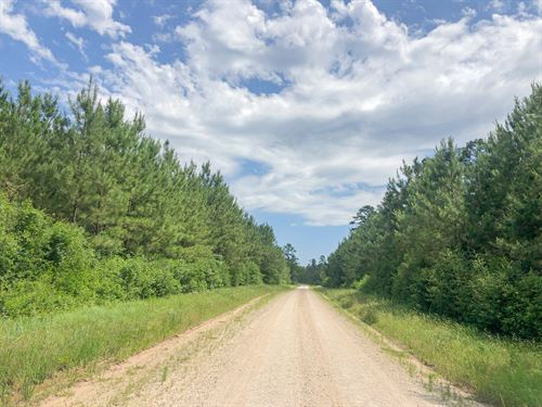 183 Acres Lost Indian Camp Road : Huntsville : Walker County : Texas