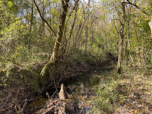 195 Acres US 190 : Woodville : Tyler County : Texas