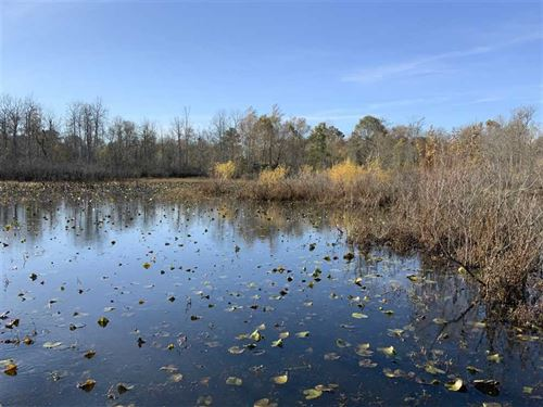 Cut Em, Proven Duck Hole on 130 ac : Mansfield : Henry County : Tennessee