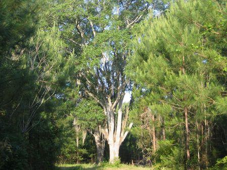 Apalachee Ridge : Sneads : Jackson County : Florida
