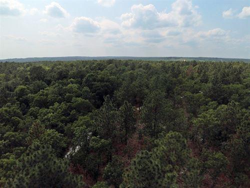 24 Acres Marlboro County SC : Wallace : Marlboro County : South Carolina
