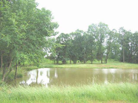 Pastoral views, Ponds : Bear Creek : Chatham County : North Carolina