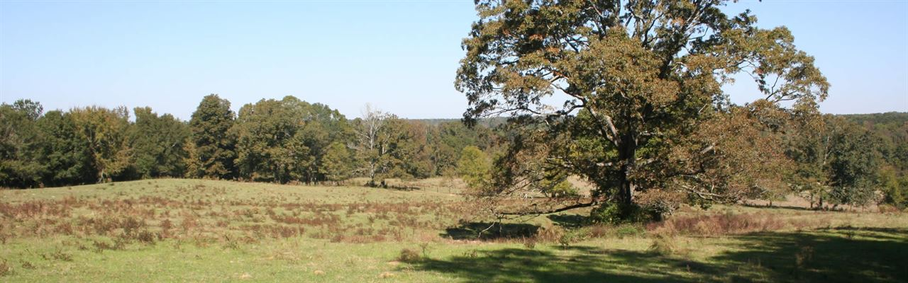 415 Acre Investment Property