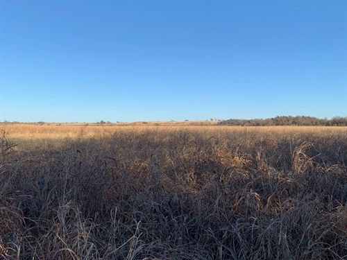Prime Hunting, Cultivated, Home : Braman : Kay County : Oklahoma