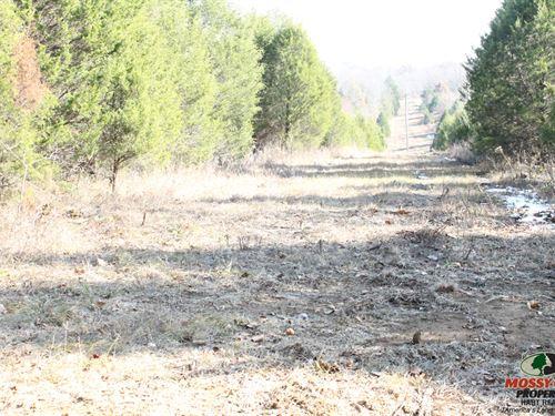 Weekend Getaway For Deer And Turkey : Brownsville : Edmonson County : Kentucky