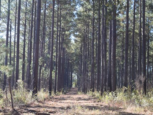 Gorgeous Investment Timberland Hunt : Americus : Sumter County : Georgia