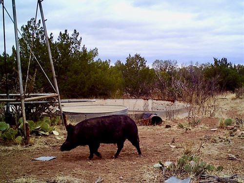 Maad Ranch : Trementina : San Miguel County : New Mexico