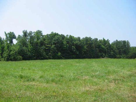 Old Farmhouse Site : Siler City : Chatham County : North Carolina