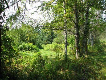 Downeast Acreage : Lubec : Washington County : Maine