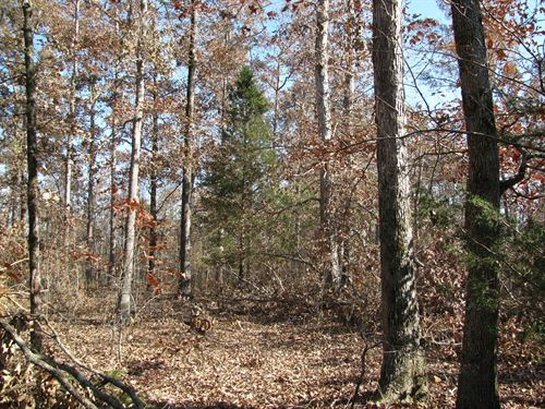 Land Tennessee, Deer Hunting Land : Scotts Hill : Decatur County : Tennessee