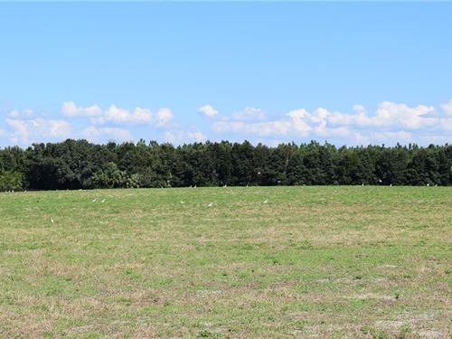 Owner Financing Beautiful Pasture : Brooksville : Hernando County : Florida