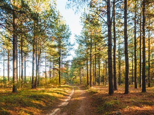 McBean Creek Timber : Hephzibah : Burke County : Georgia
